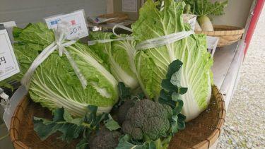 農園で採れた安心安全な野菜の直売コーナー設置いたしました!